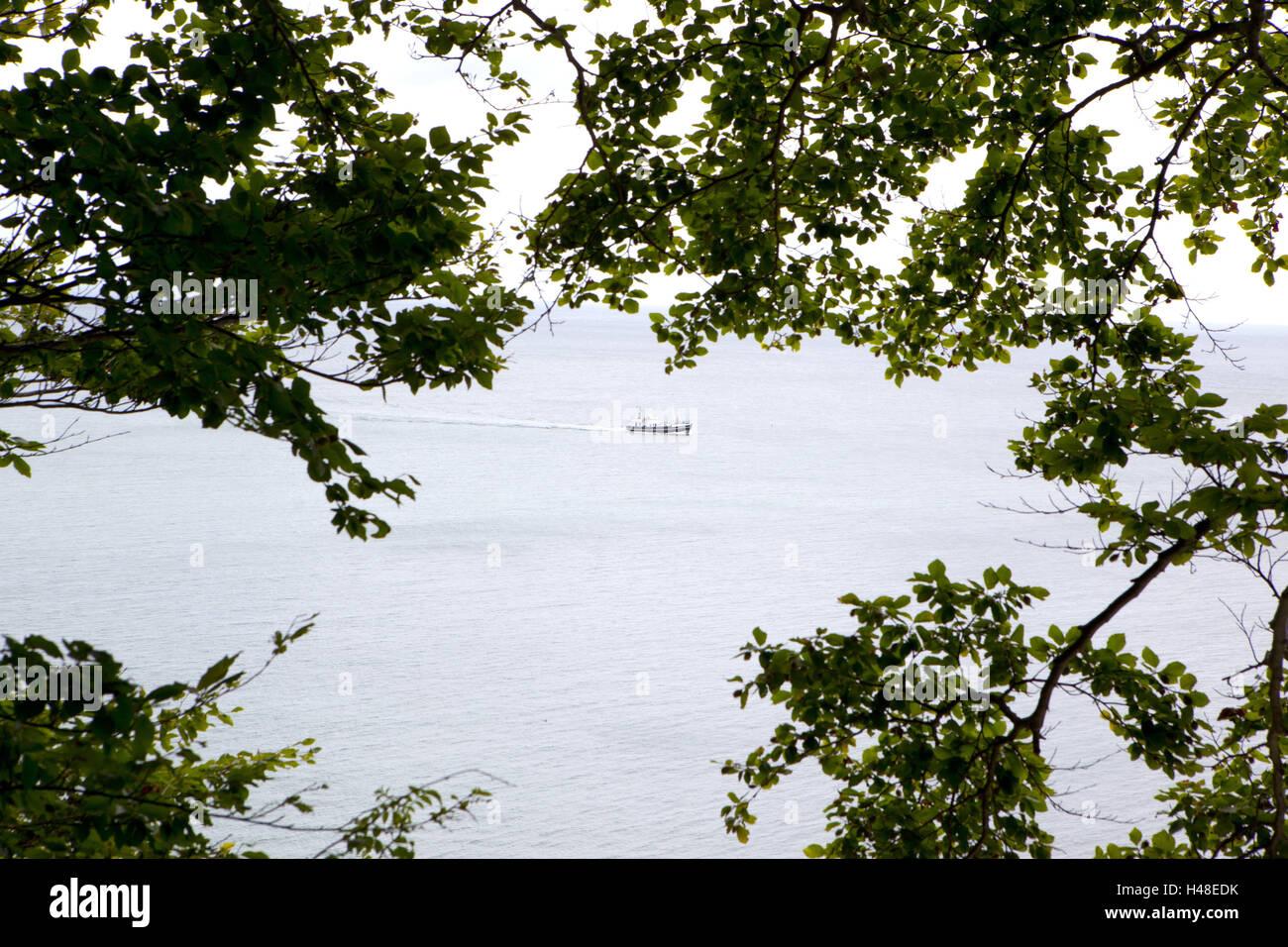 Rügen, the Baltic Sea, ship, sea, waters, navigation, twigs, leaves, Stock Photo