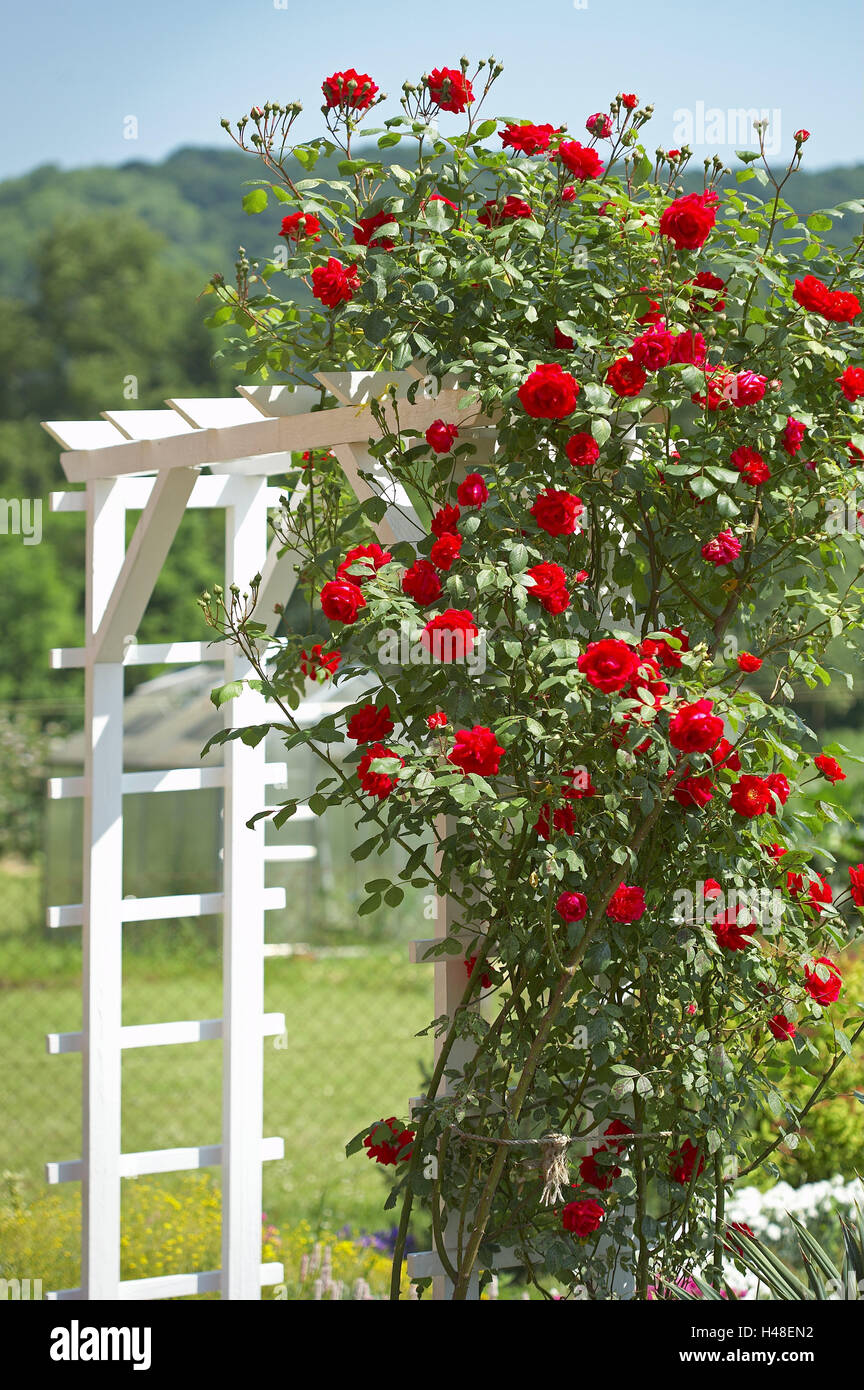garden passage rankhilfe climbing rose stock photos & garden passage