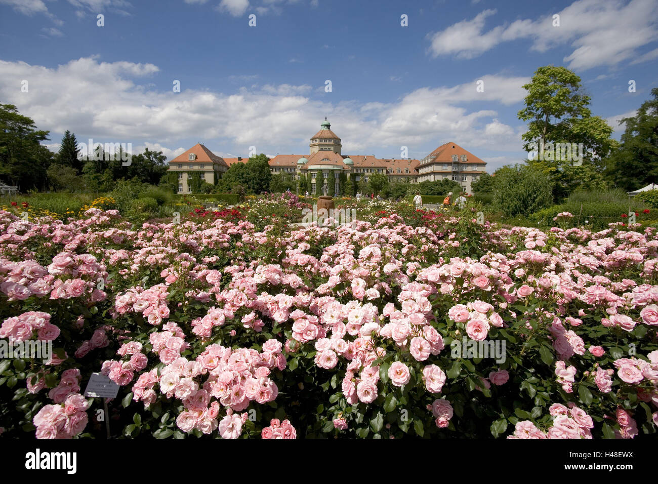 Captivating Germany, Bavaria, Munich, Botanical Garden, Rose Patch, Nymph Castle,  Institute Building, Rose Garden, Flowers, Blossom, Pink, Excessively,  Summer, Outside, ...