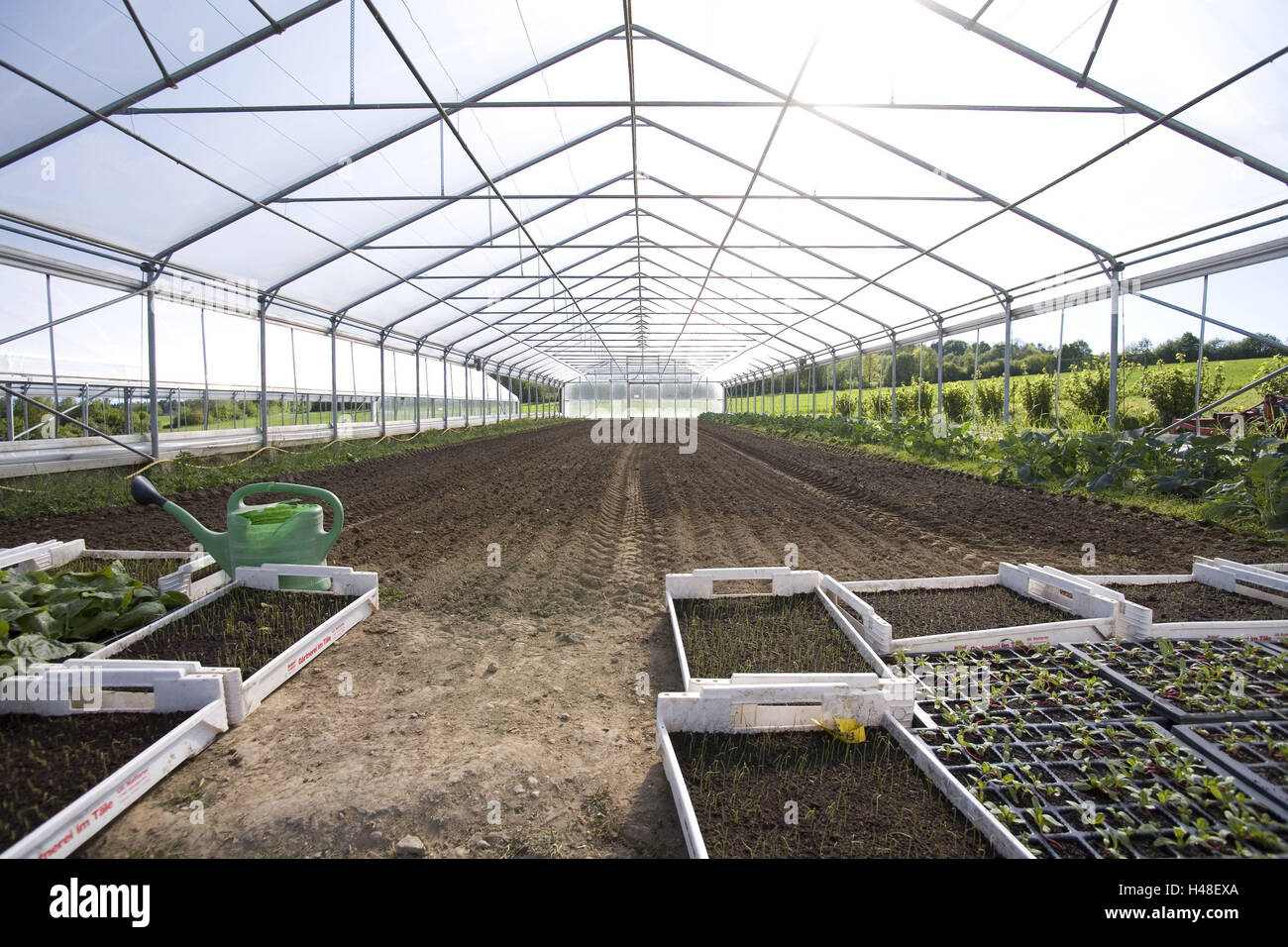 Greenhouse, inside, hothouse, market garden, cultivation, cultivation, plants, vegetables, vegetable plants, the - Stock Image