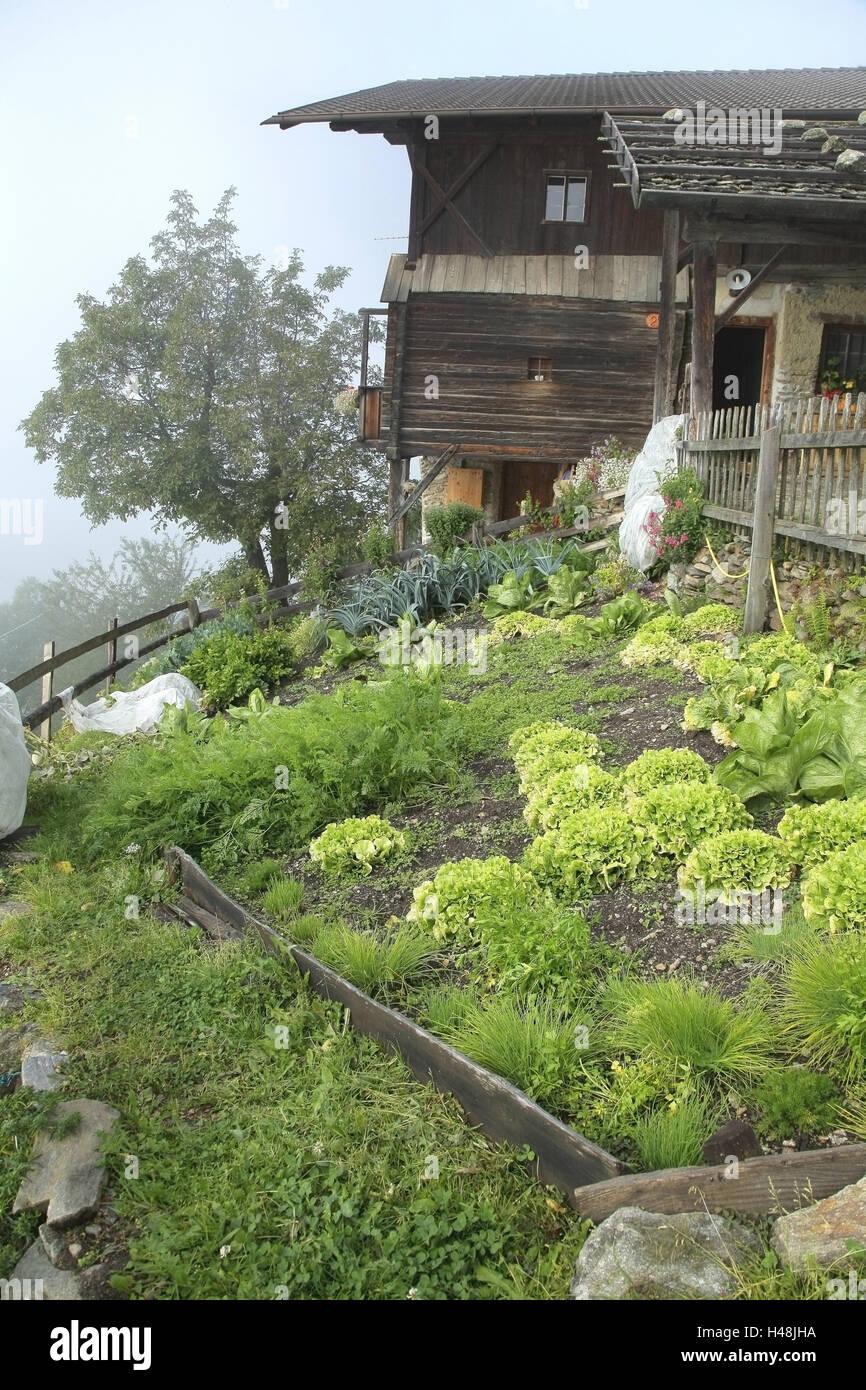 South Tyrolean mountain farm, vegetable garden, Italy, scenery Stock