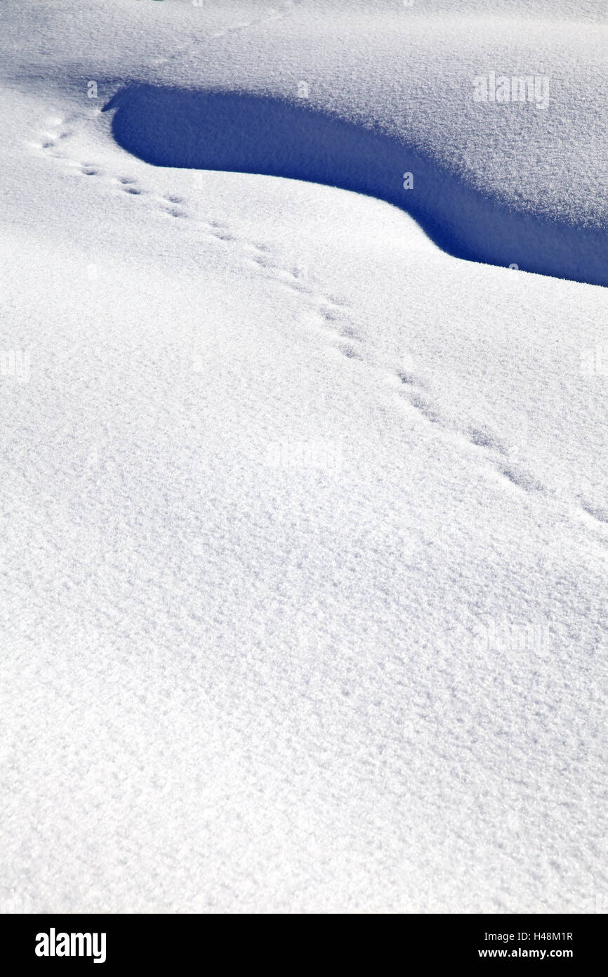 Tracks in the snow, - Stock Image