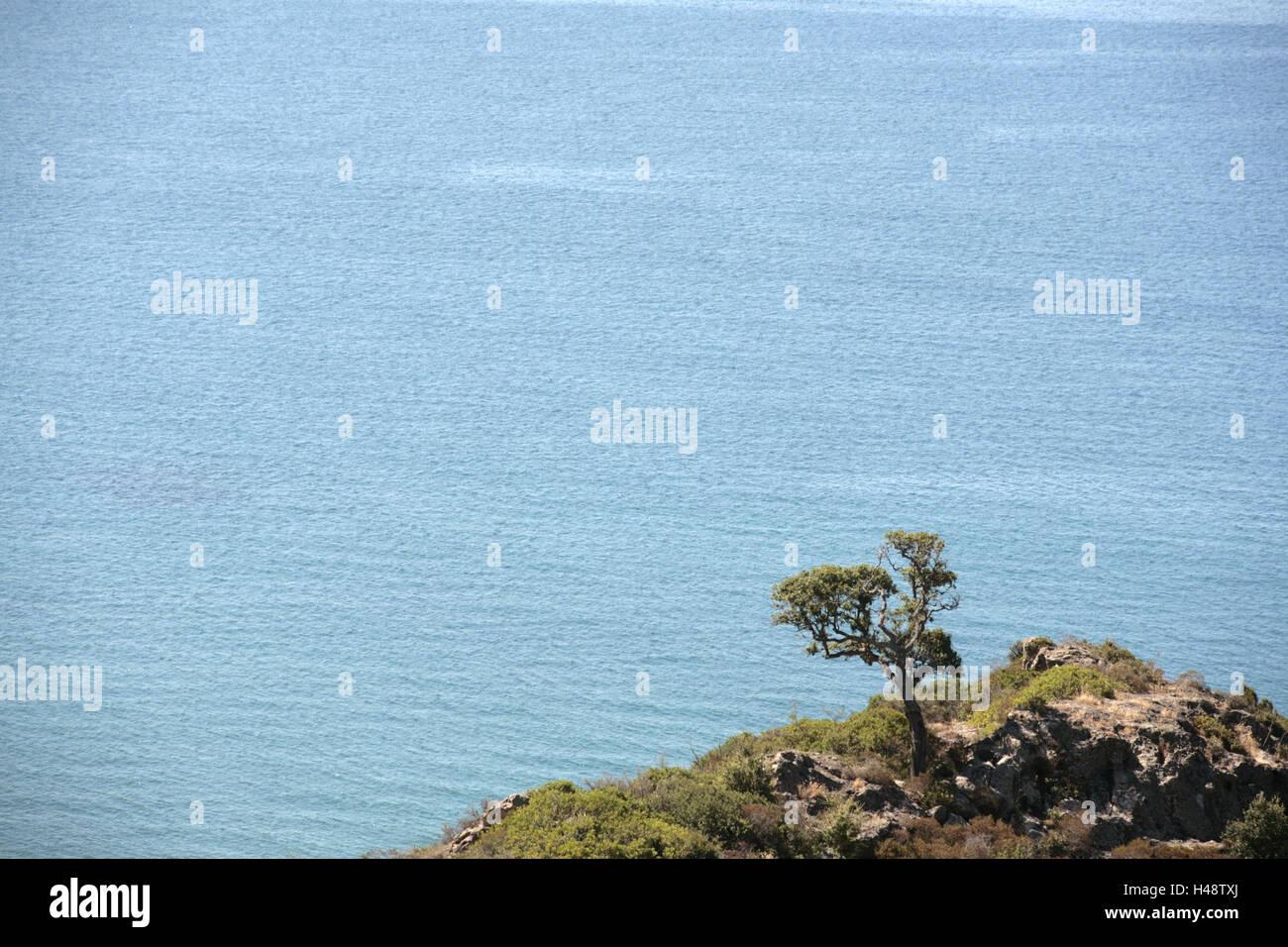 Italy, Sardinia, Bosa, coastal scenery, tree, sea, Europe, island, destination, nature, Macchia, scenery, coast, - Stock Image