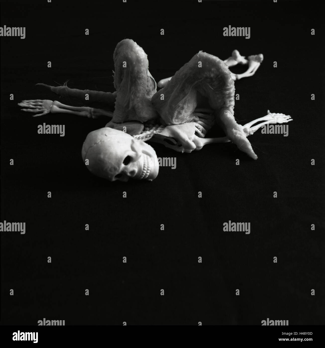 Elastic skeleton, poultry wing, plucked, raw, lie, 'fallen angel', b/w, toys, toys skeleton, skeleton, skeleton, - Stock Image