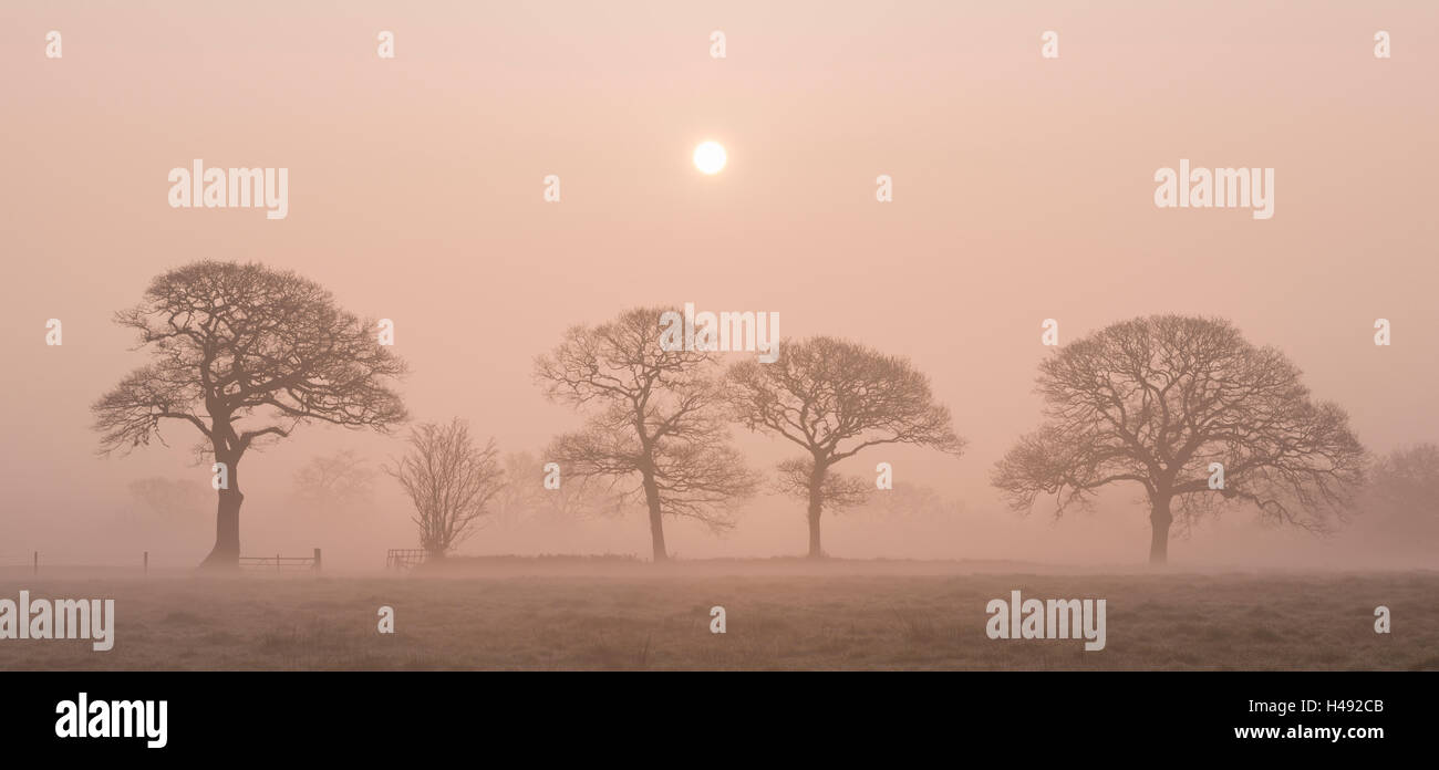 Sunrise on a foggy winter morning in Devon countryside, England. Winter (March) 2014. - Stock Image