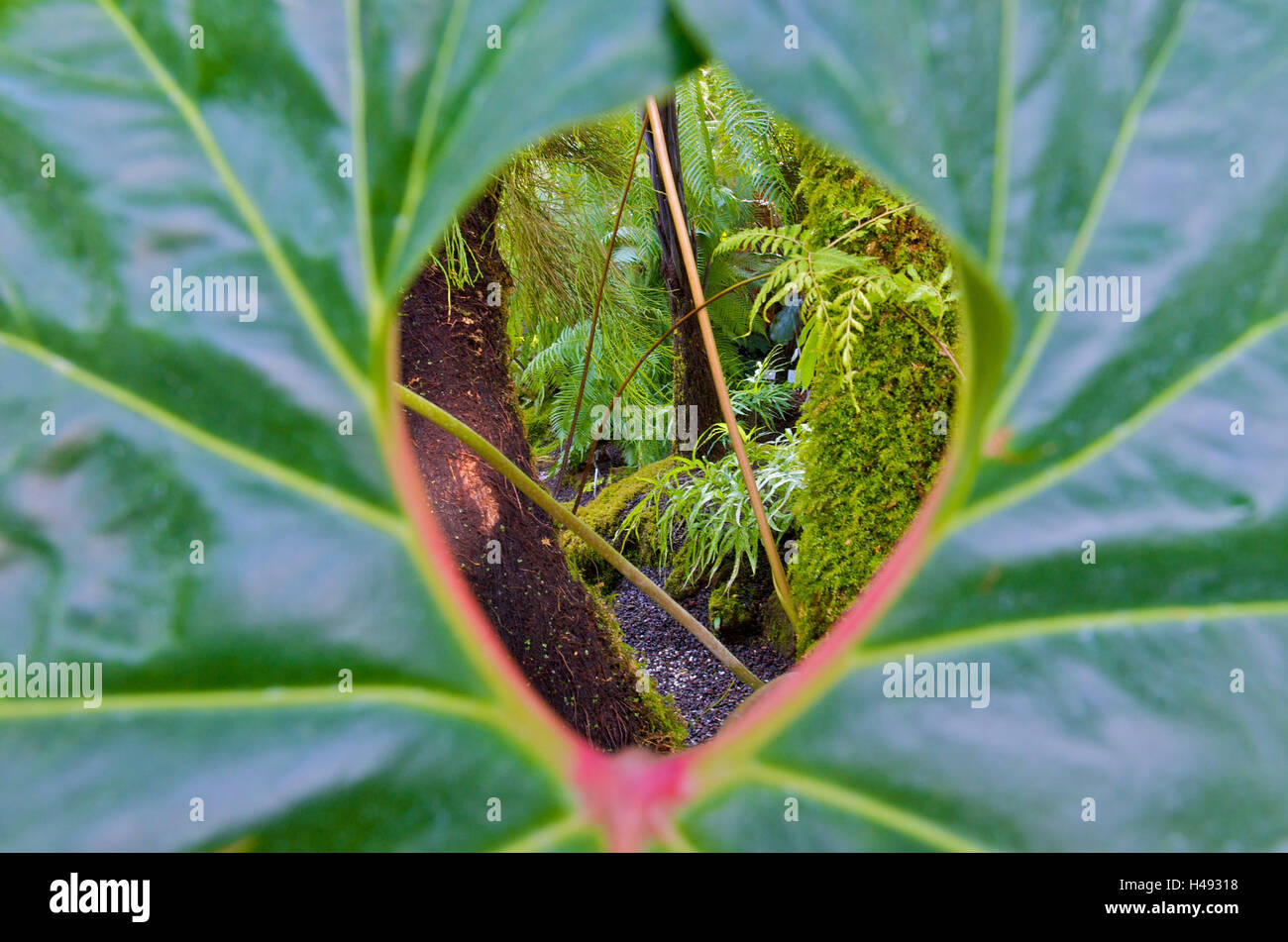 View through leaf in a primeval forest, - Stock Image