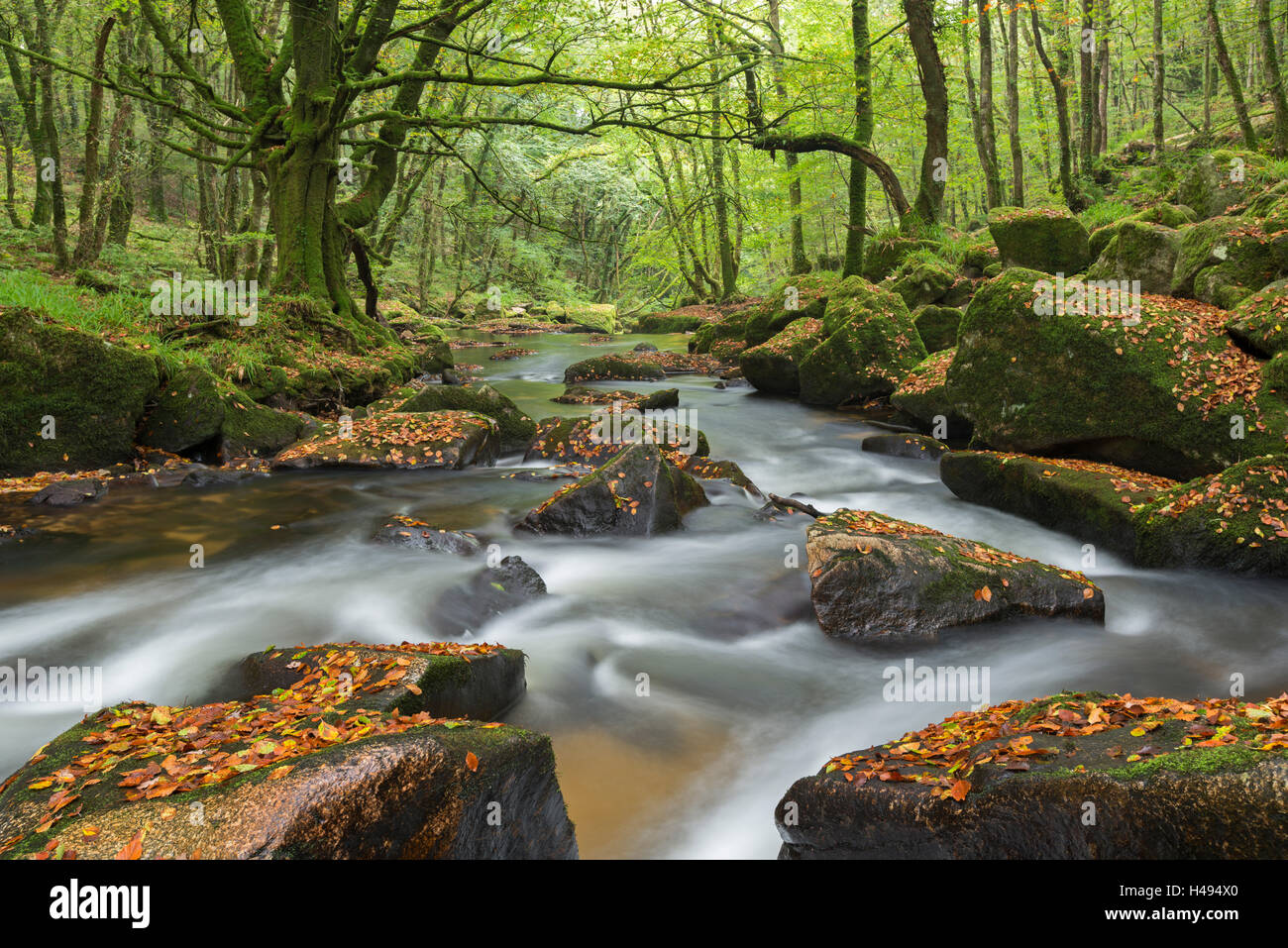 The River Fowey at Golitha Falls on Bodmin Moor, Cornwall, England. Autumn (September) 2013. - Stock Image