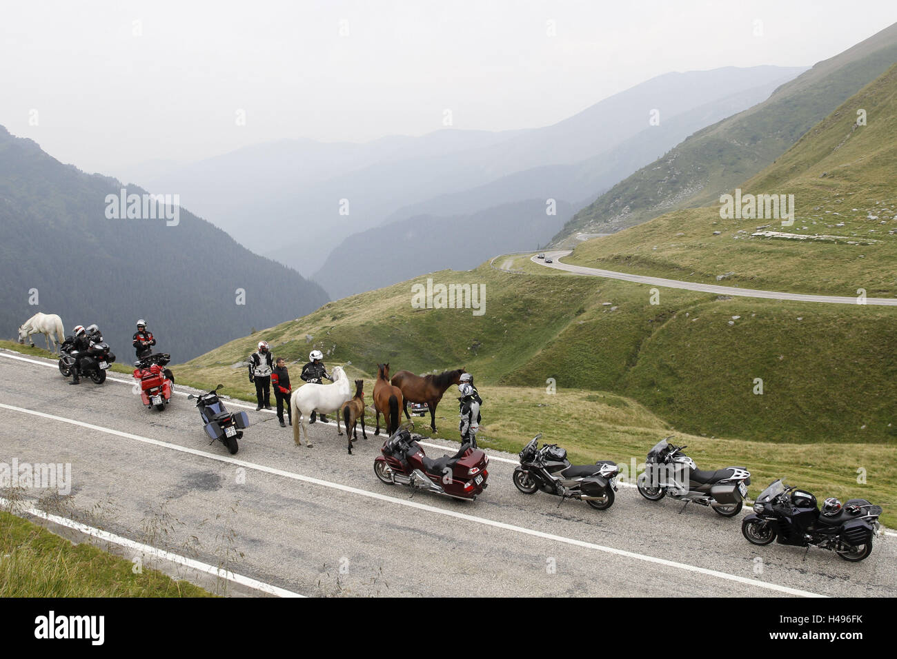 Motorcycle rest, alp ambience, country road, horses on pavement, - Stock Image