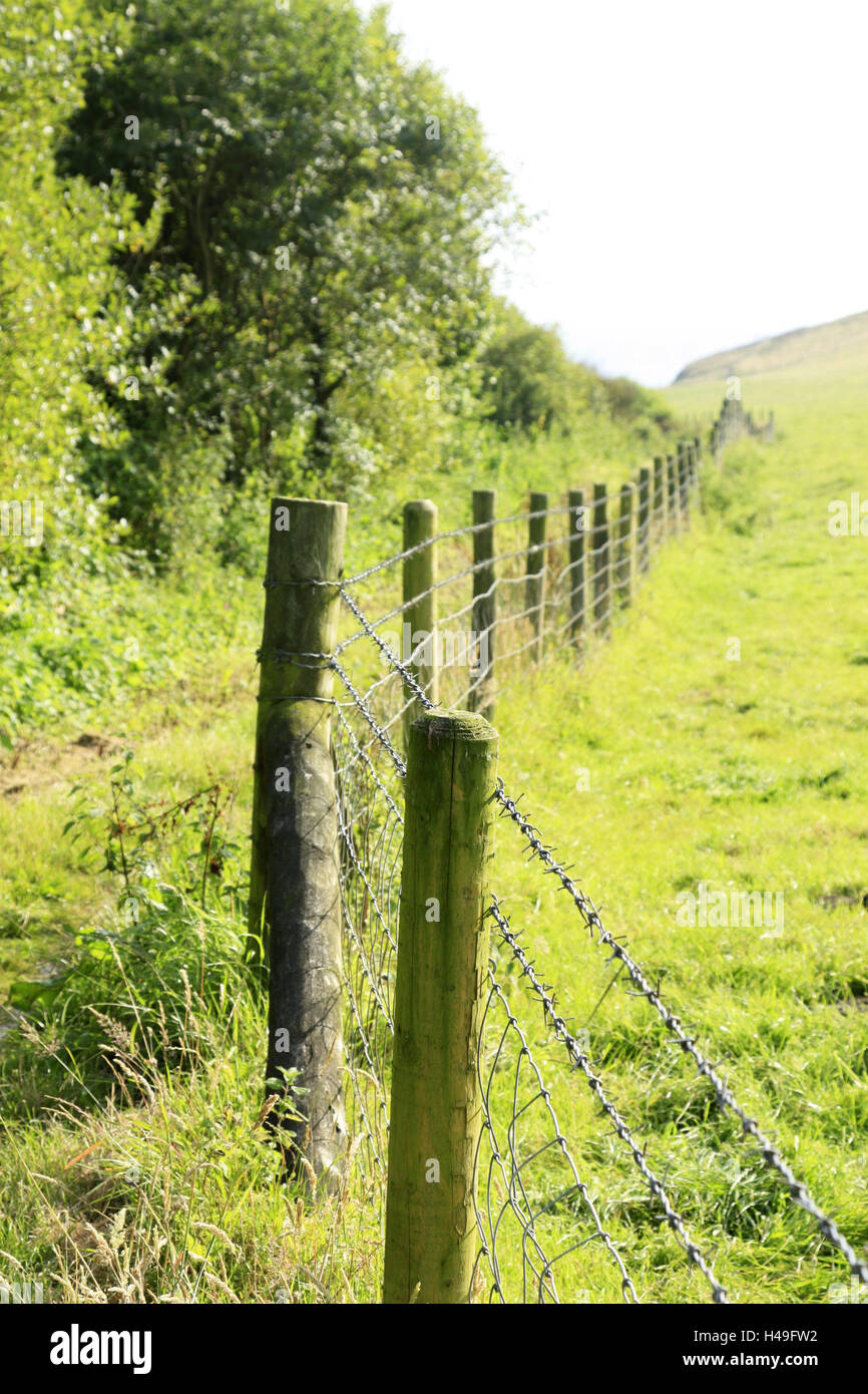 Hill scenery, barbed wire fence, summer, scenery, edge the forest, meadow, pasture, fenced in, fence, pasture fence, - Stock Image