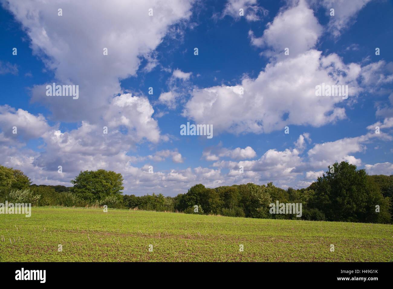 Germany, Schleswig - Holstein, field, Stock Photo
