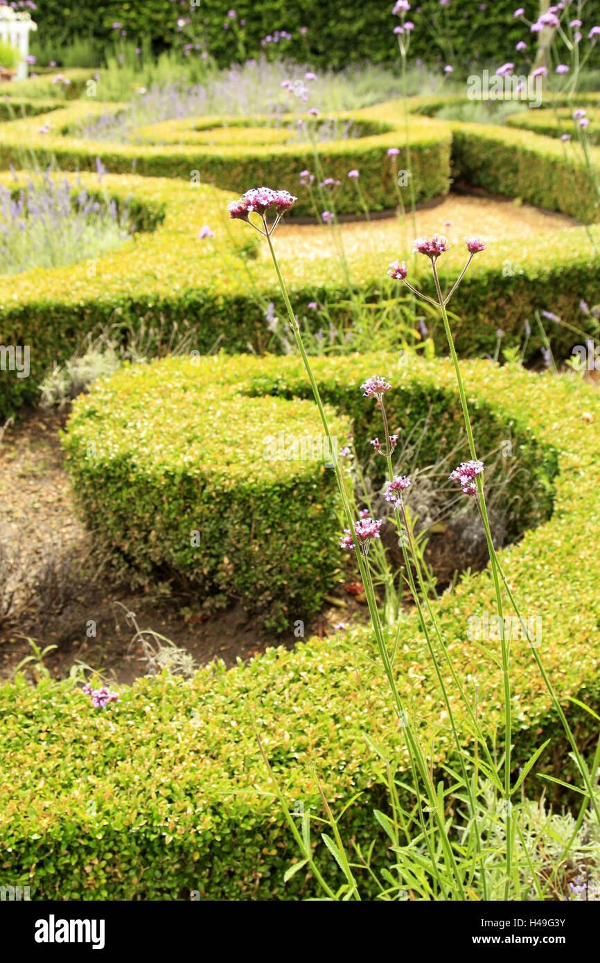 Park, hedge, ornamental editing, summer, garden, park, shrubs, box, ornamental editing, garden architecture, scenery - Stock Image