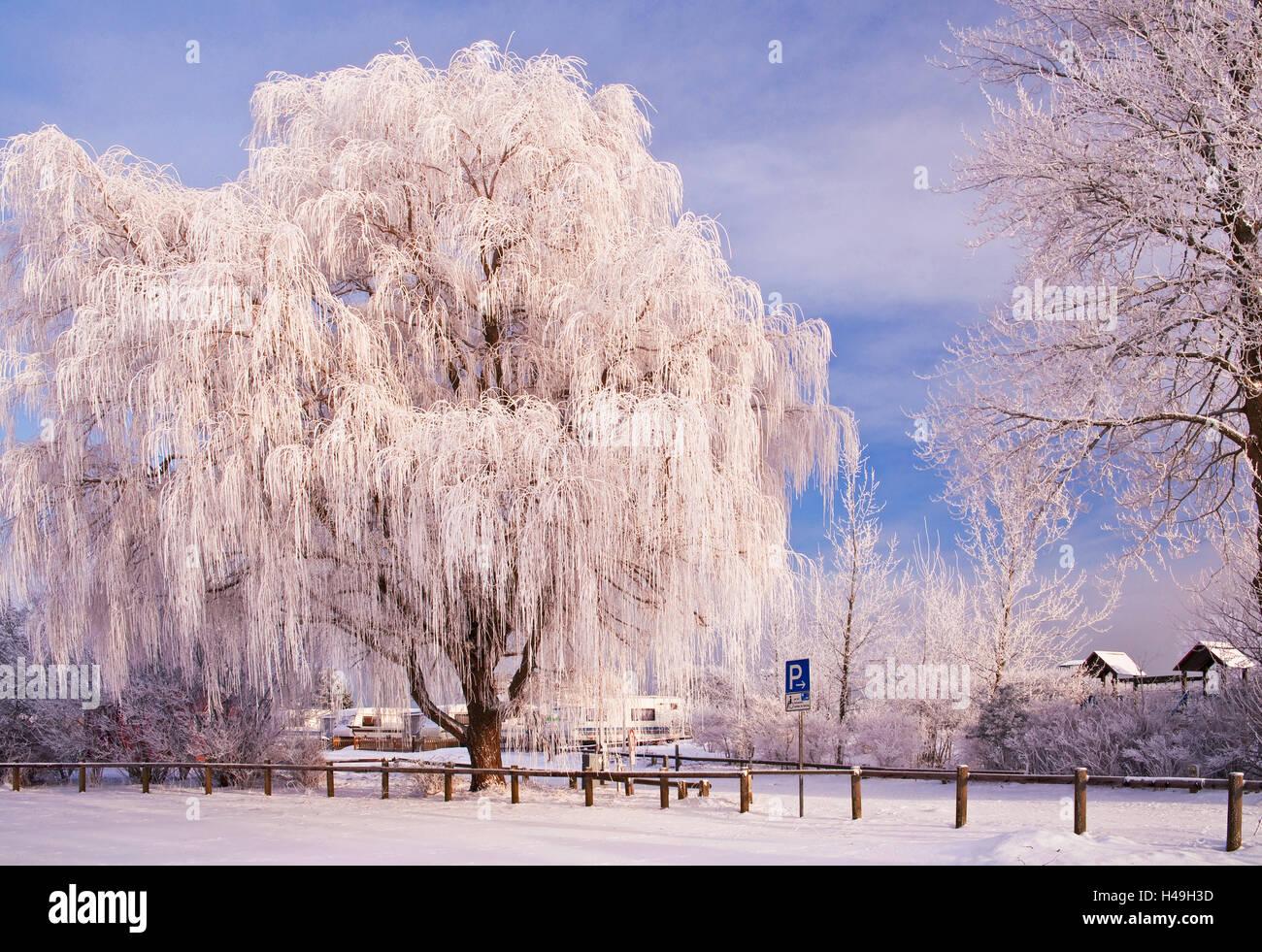 Rime, trees, Rettin, Schleswig-Holstein, - Stock Image