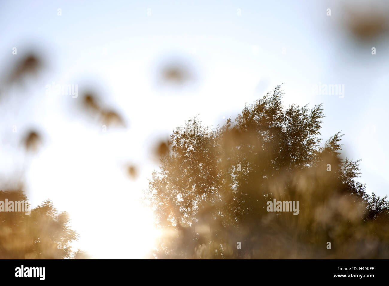 backlight, plants, blur, worm's eye view, - Stock Image