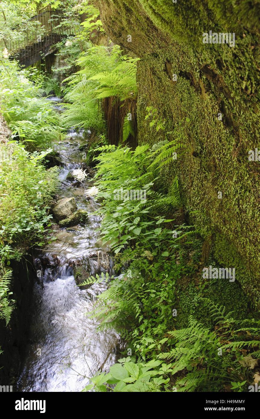 Fern about brook, Elbsandsteingebirge, Böhmische Switzerland, Czechia, - Stock Image