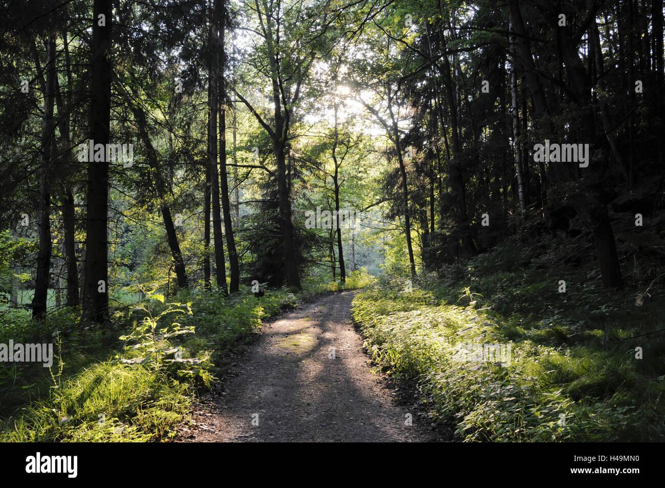 Polenztal, forest way, Elbsandsteingebirge, Saxon Switzerland, Saxony, Germany, - Stock Image