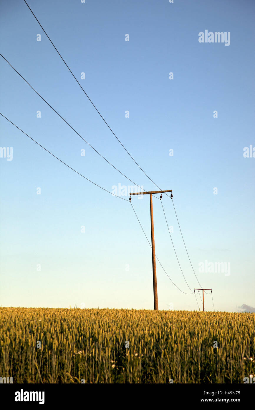 Field, agriculture, power poles, rurally, blue heaven, grain-field, growing of grain, agriculture, current, power - Stock Image