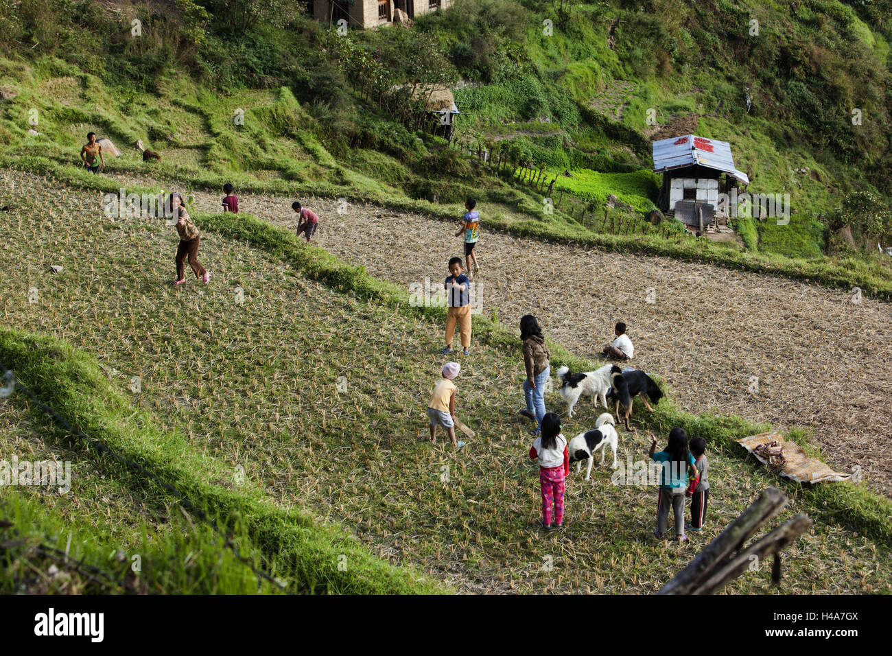 Kingdom of Bhutan, children playing on rice field, - Stock Image