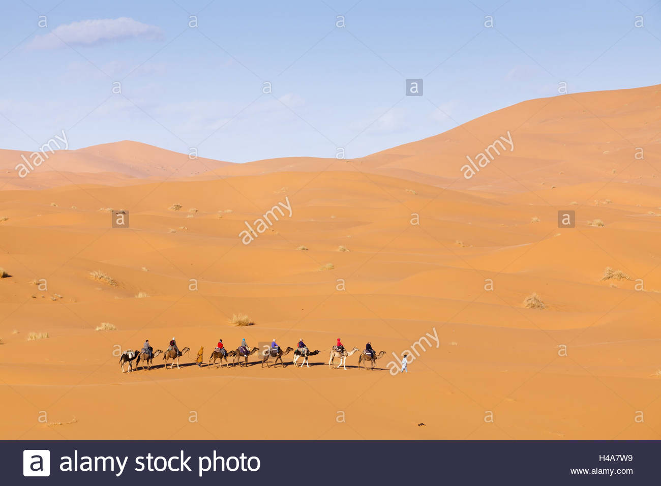 Camel caravan in the dunes of the Erg Chebbi, ocean of Sand, Morocco, North Africa, Merzouga, Stock Photo