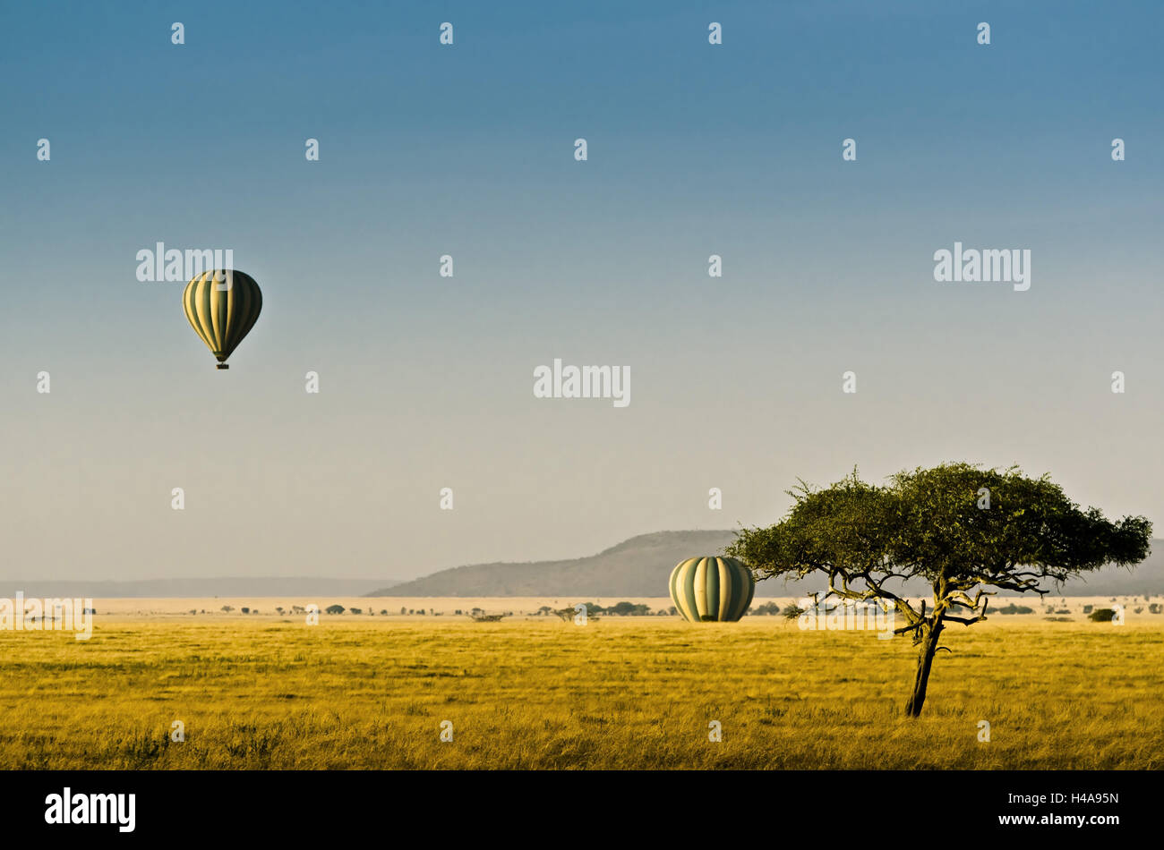 Africa, Tanzania, East Africa, Serengeti, national park, balloon, hot-air balloon, balloon ride, - Stock Image