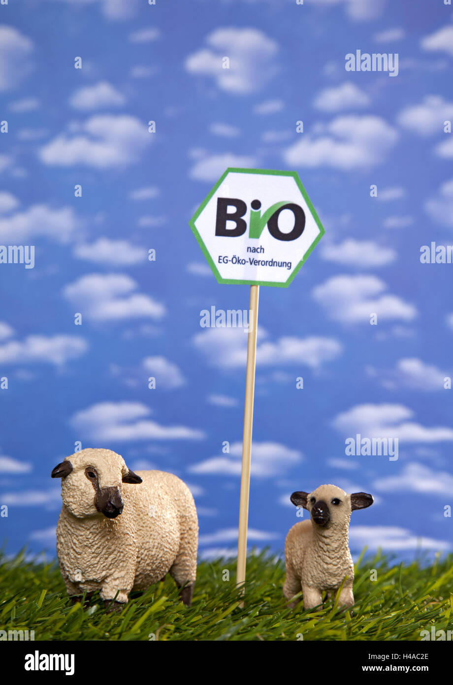 Symbolical image, organic, sustainability, meat, origin, - Stock Image