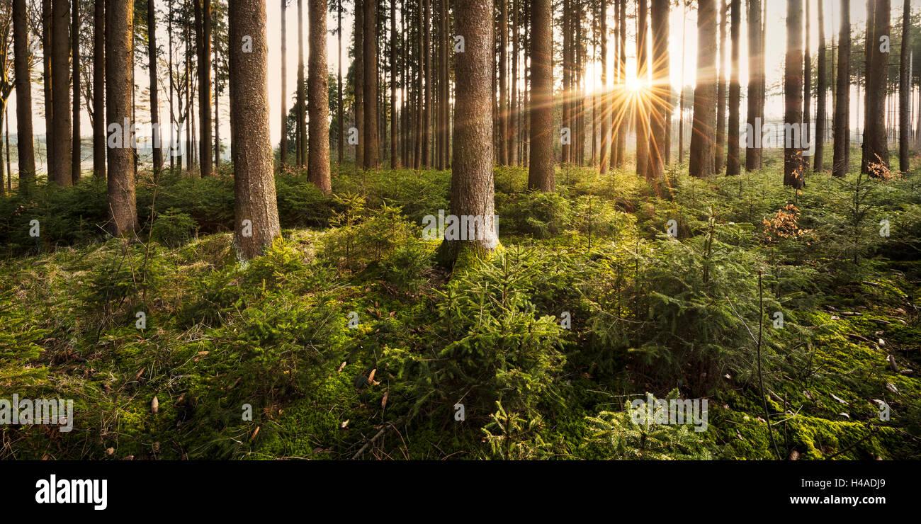 Bavaria, Augsburg, forest, sunrise, - Stock Image