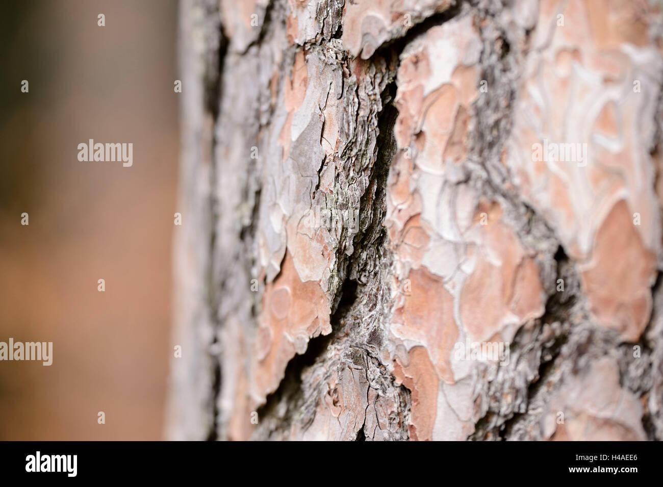 Scots pine, Pinus sylvestris, bark, detail, - Stock Image