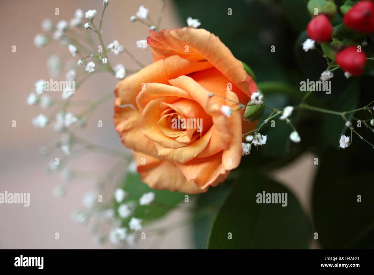 flowers, rose, Stock Photo