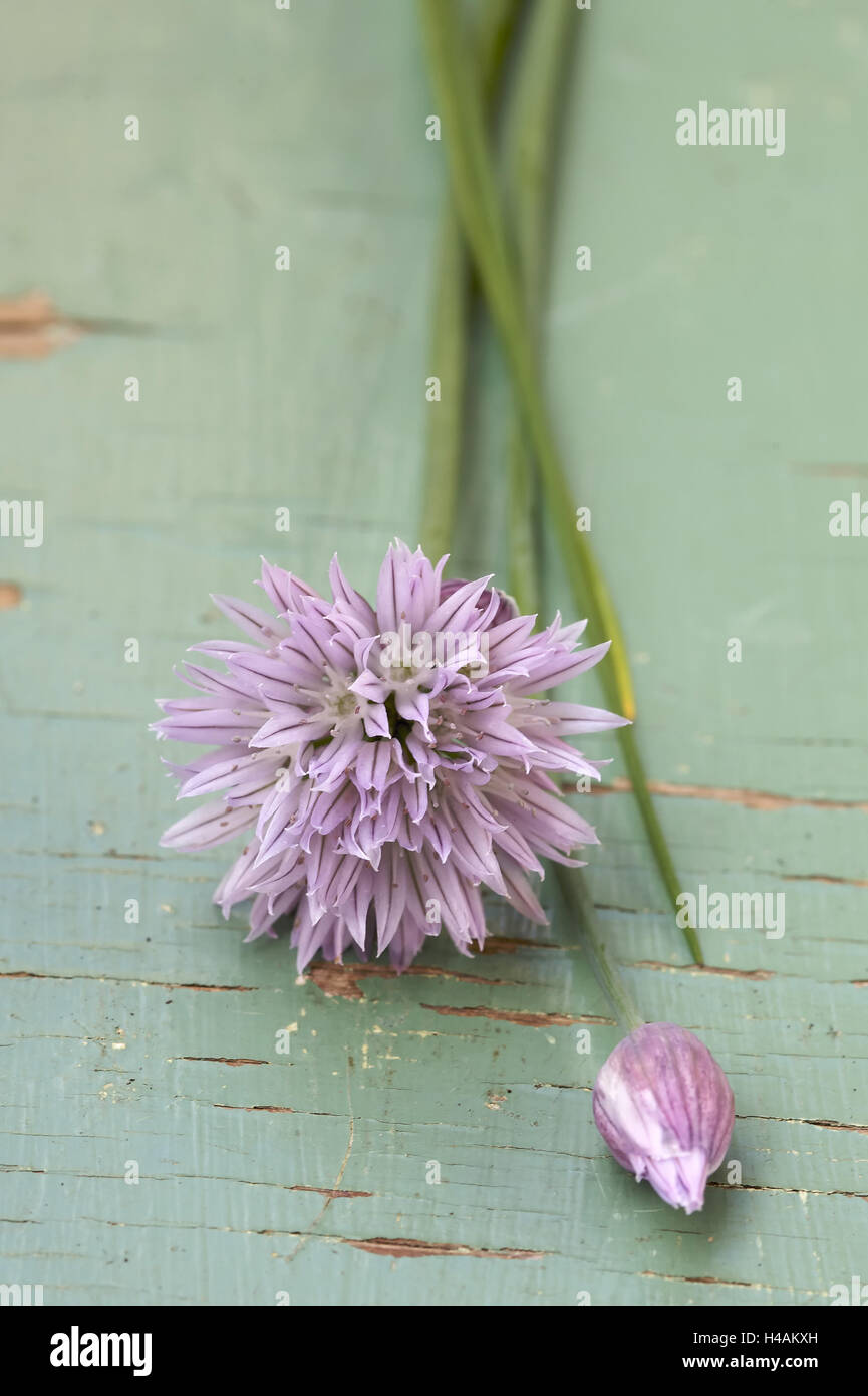 Chives with blossom, close-up, - Stock Image