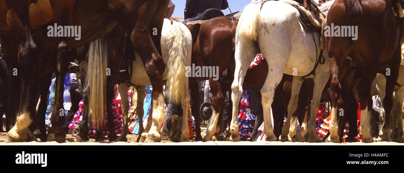 Spain, Andalusia, tablespoon Rocio, Romeria, horses, detail, destination, place of interest, feast, public festival, - Stock Image