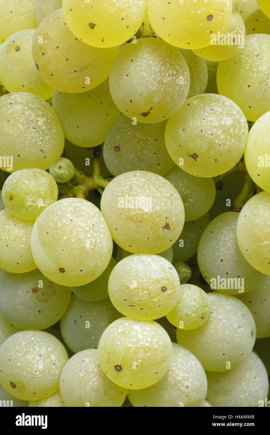 Grapes, sort of Riesling, hose means remains, - Stock Image
