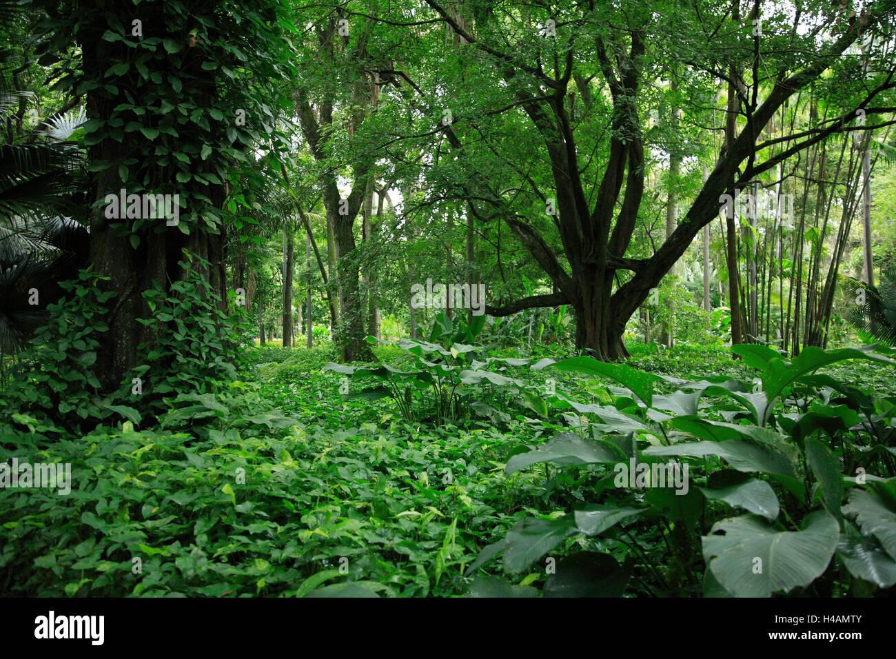 Brazil, Rio de Janeiro, botanical garden, primeval forest, South America, destination, place of interest, garden, - Stock Image