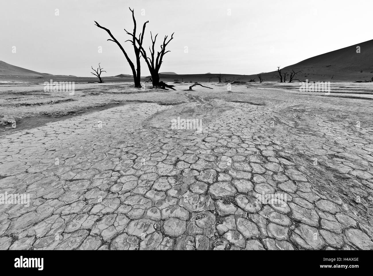 Dry river bed with dead trees, cracked mud in black and white - Stock Image