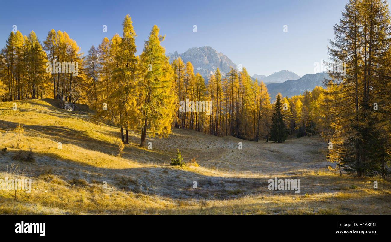 Monte Cristallo, larches, Cortina d'Ampezzo, Veneto, the Dolomites, Italy Stock Photo
