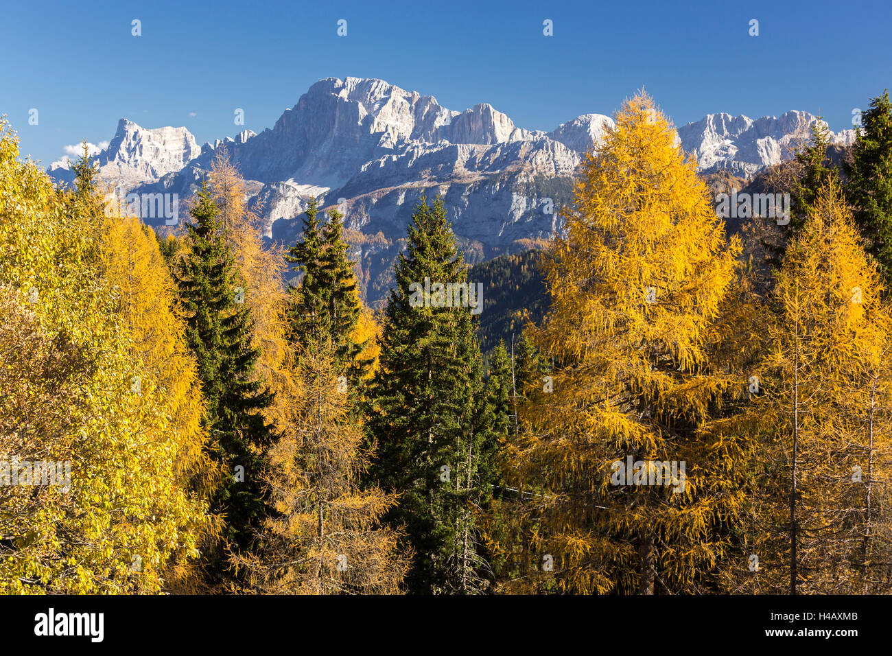Cima Pape o Sanson, Valle di Valles, larches, Veneto, the Dolomites, Italy Stock Photo