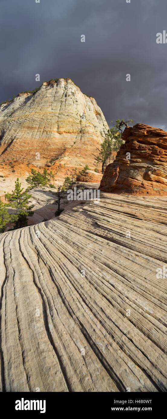 Checkerboard Mesa, Zion National Park, Utah, USA - Stock Image