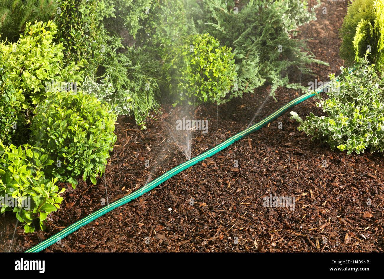 Sprinkler Hose Garden Patch Water Stock Photos & Sprinkler Hose ...