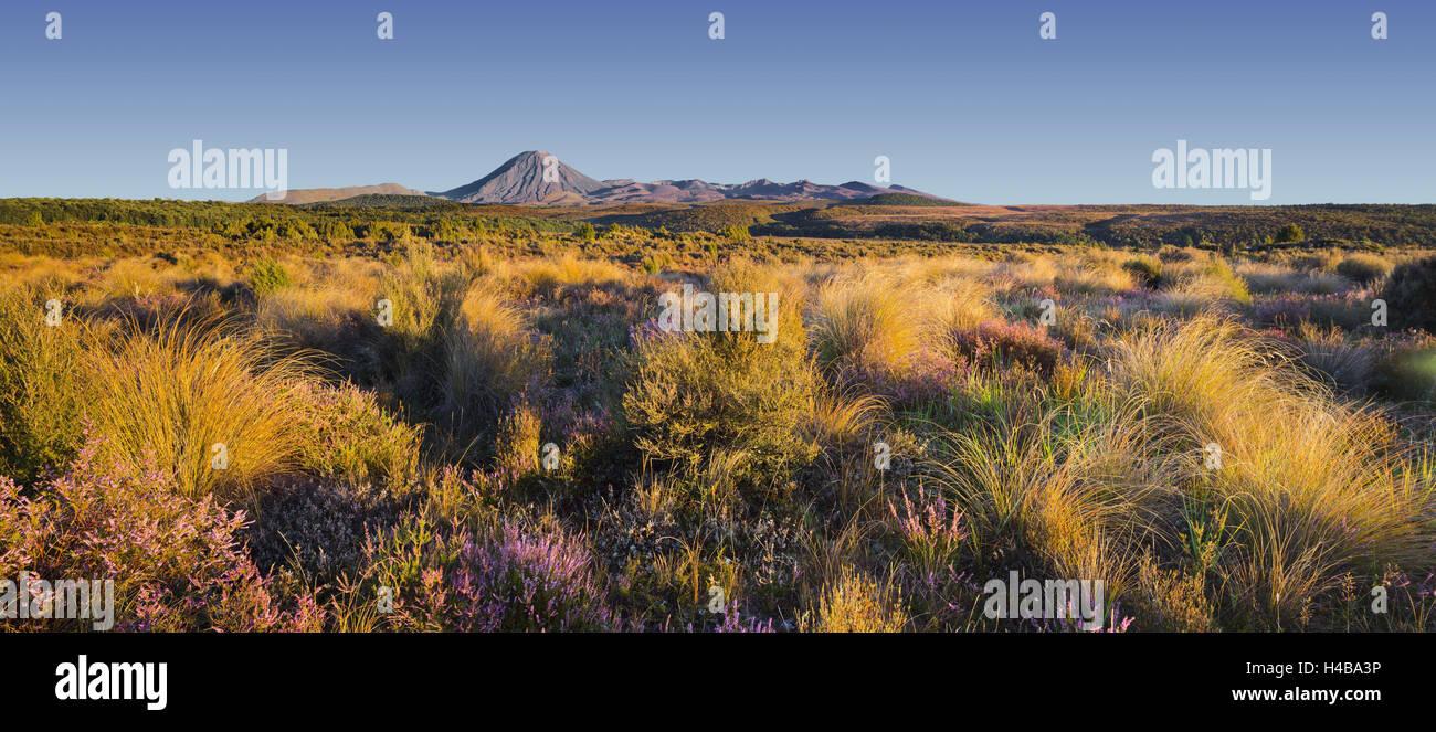 Vegetation, Mount Ngauruhoe, Tongariro National Park, Manawatu-Manganui, north Island, New Zealand - Stock Image