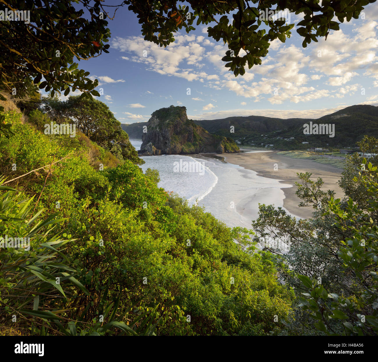 Lion rock, Piha, Auckland, north Island, New Zealand - Stock Image