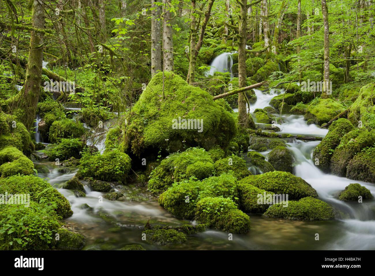moss-overcast stones, influx of the Orbe, Vallorbe, Vaud, Switzerland - Stock Image