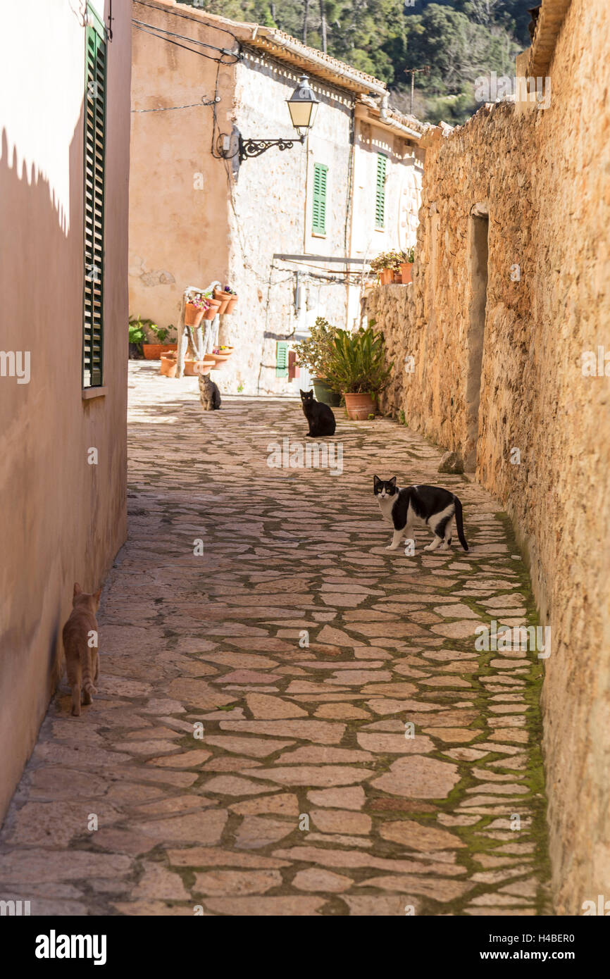Old Town, alley, cats, residential houses, Valldemossa, island Majorca, - Stock Image