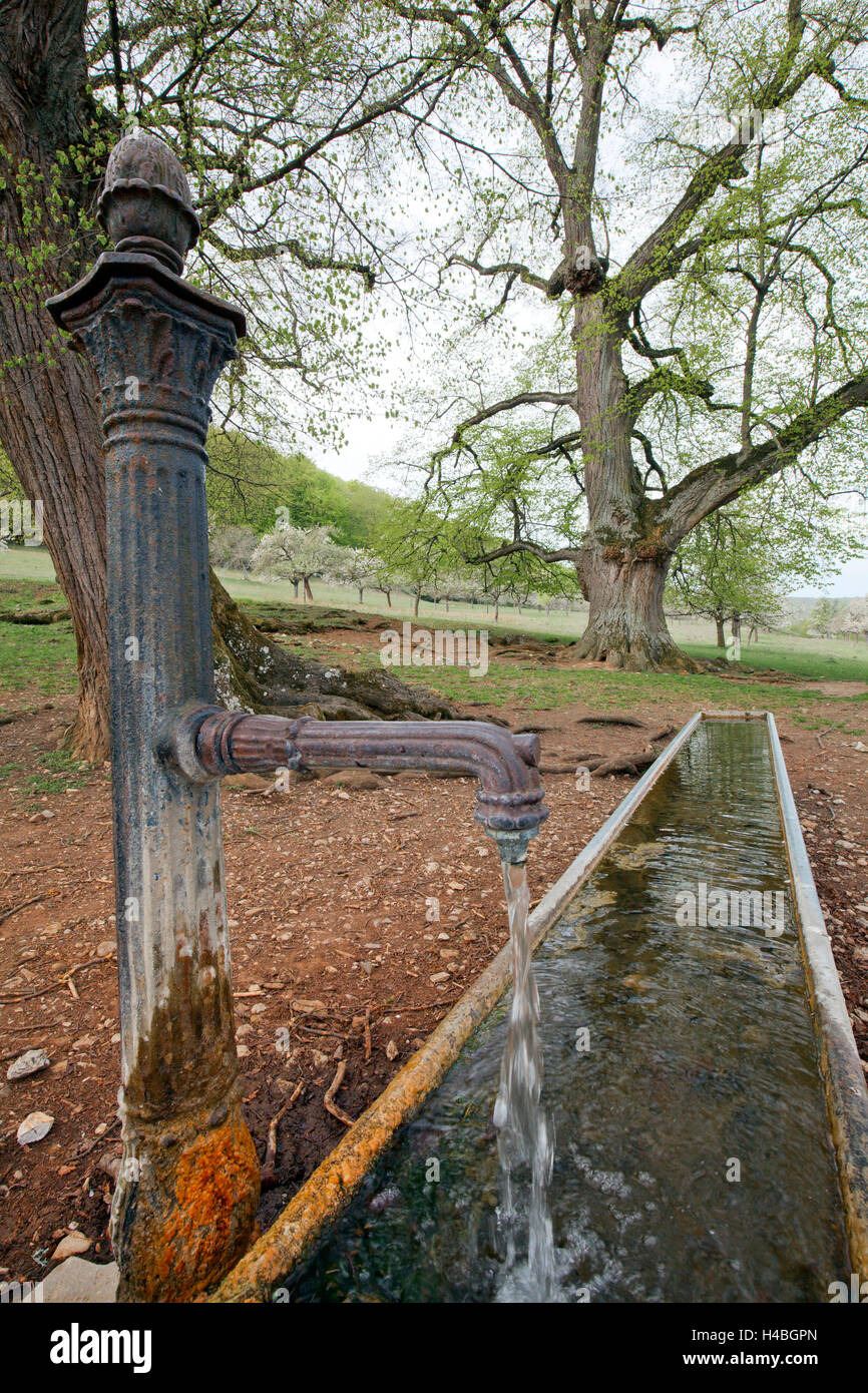 Old well with lime tree Stock Photo