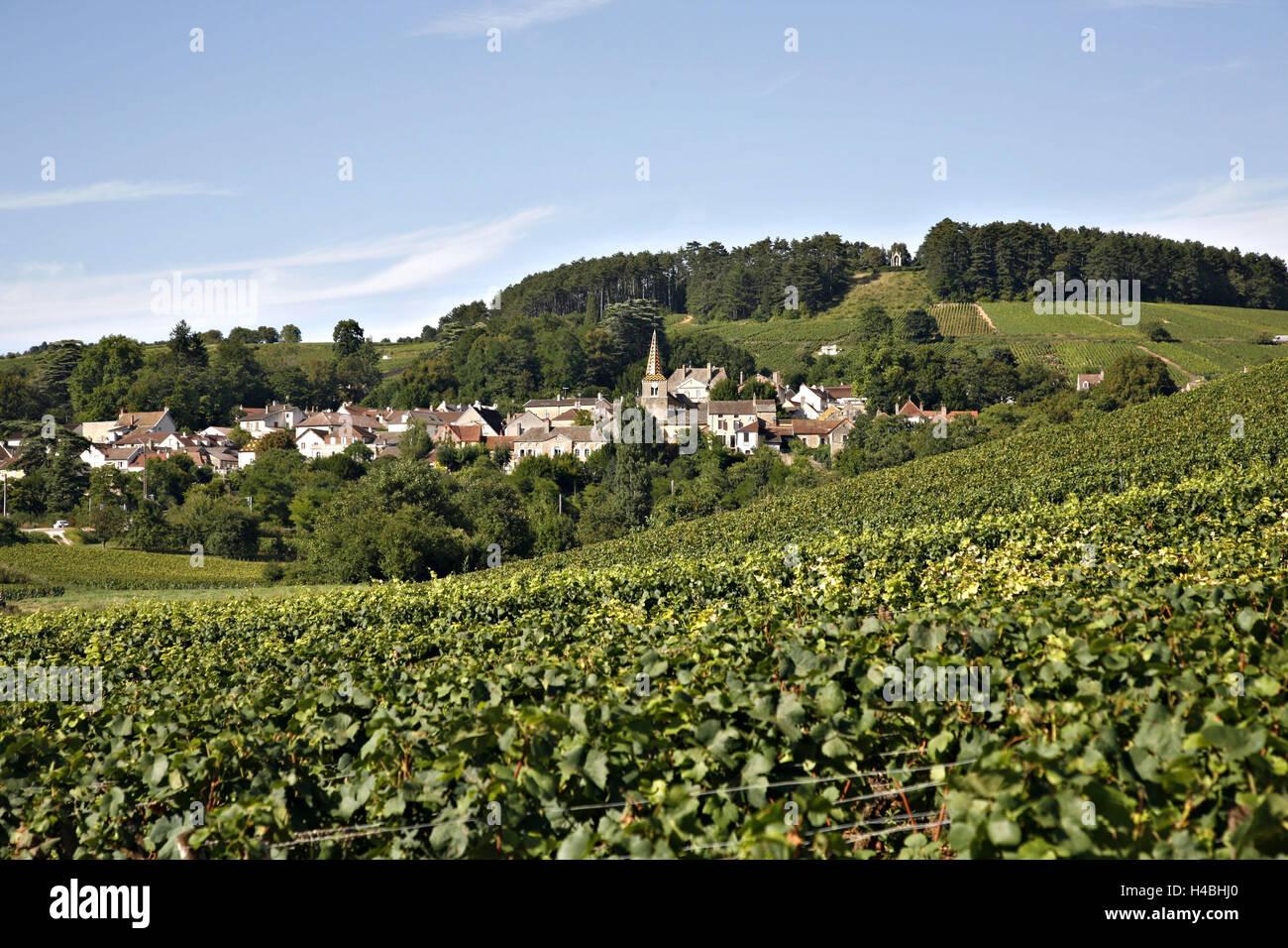 Europe, France, Burgundy, Beaune, winegrowing, - Stock Image