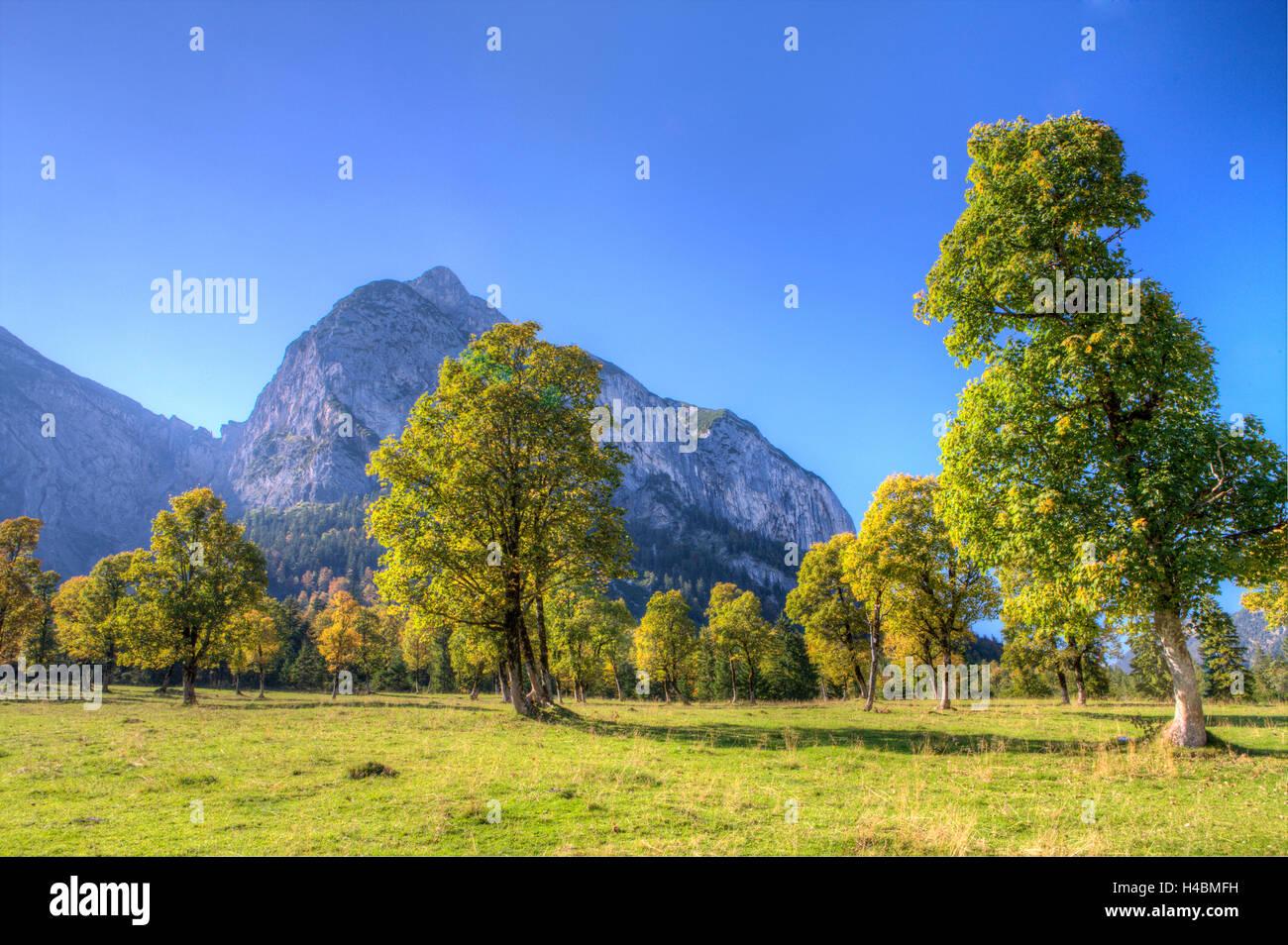 Große Ahornböden, Engtal, Eng, Tyrol, Austria, Alpenpark Karwendel, harewood, - Stock Image