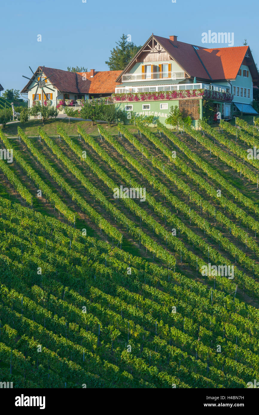 Austria, Styria, area of Leibnitz, in the Südsteirischen Weinstrasse to the south of Gamlitz - Stock Image