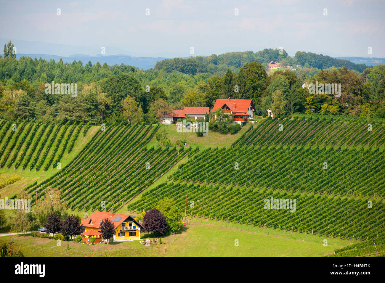 Austria, Styria, area of Leibnitz, scenery in the Südsteirischen Weinstrasse to the south of Gamlitz - Stock Image