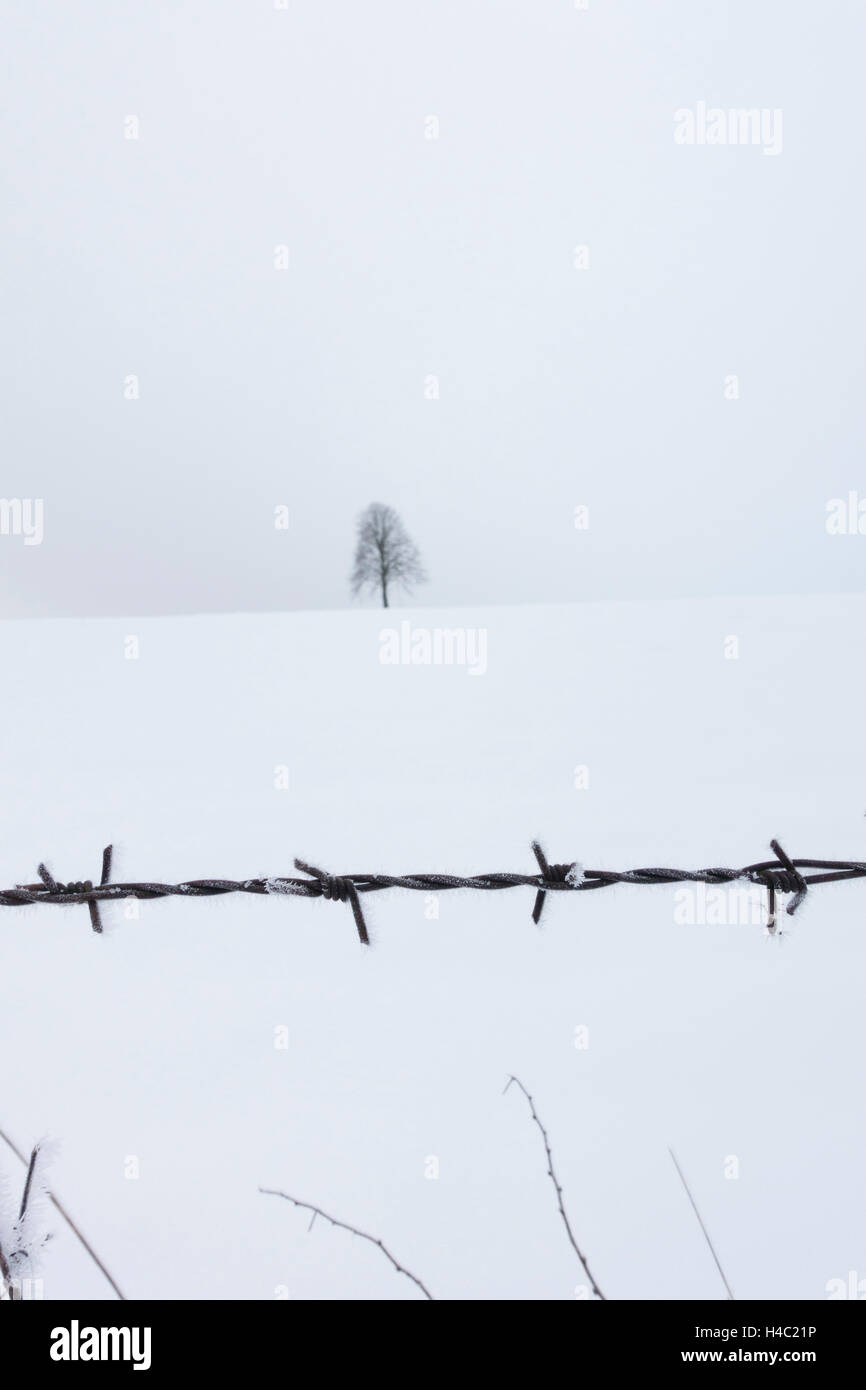 Barbed Wire And Tree Stock Photos & Barbed Wire And Tree Stock ...