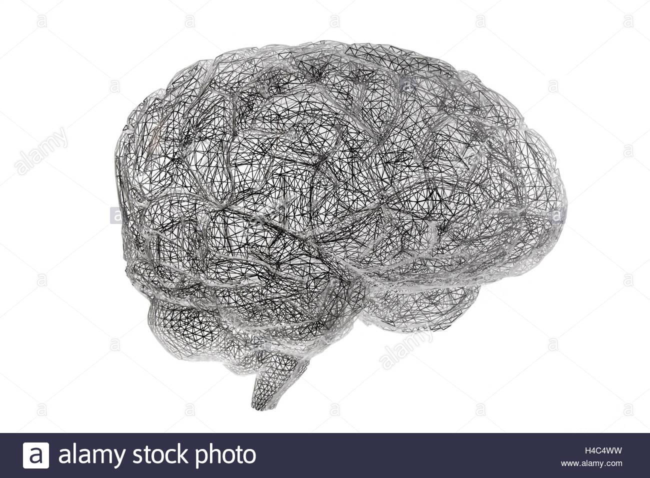 Wired brain model rendering on white background, Museum of Human Evolution Burgos Spain Europe - Stock Image