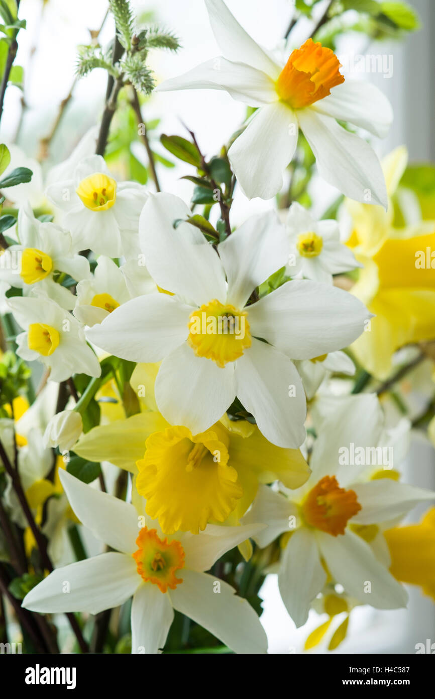 Easter vase of flowers with Daffodils - Stock Image