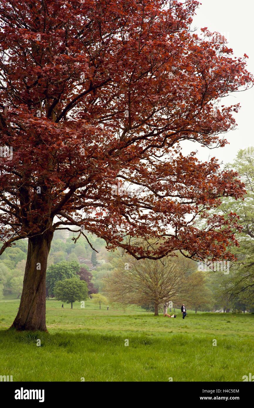 Great Britain, London, tree, grass, park, garden Stock Photo