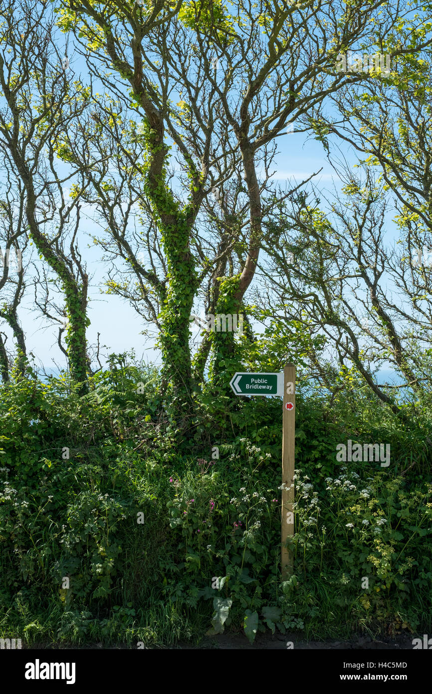 Public Bridleway or foot path sign in hedgerow in Devon - Stock Image